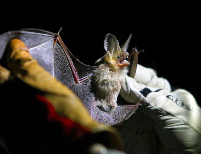 Bats Offered Alternative to Haunted Houses
